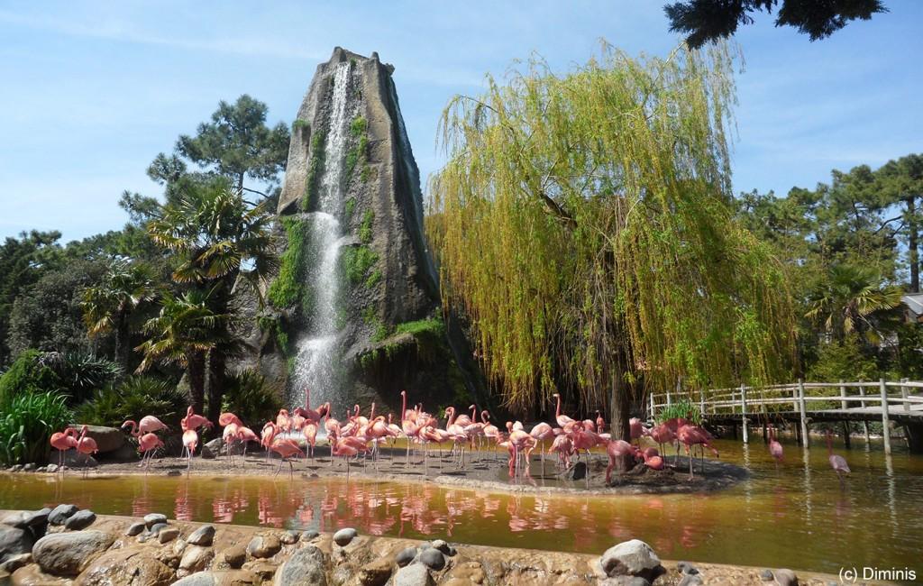 Zoo_La_Palmyre